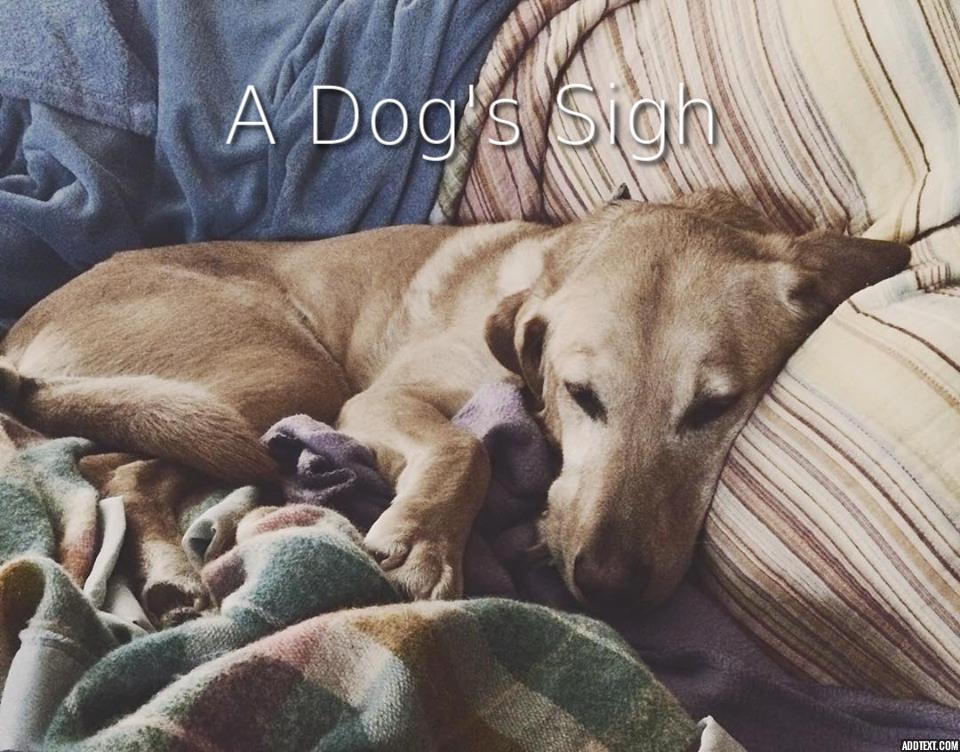 A Dog's Sigh